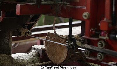industrial saw machine wood plant