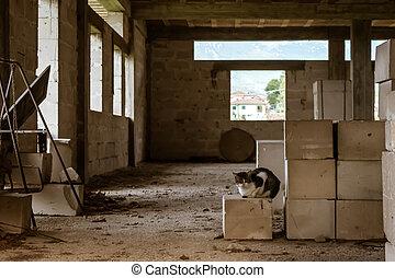 industriebedrijven, kat