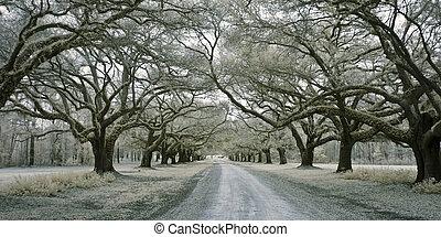 infared avenue of oaks