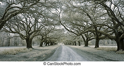 infared avenue of oaks - infrared photo of road lined with...