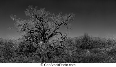 Infared Monochrome Image of a Tree in the Brush