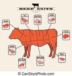 beef cuts - info graphic of the beef cuts on light...