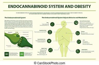 infographic, システム, 横, endocannabinoid, 肥満