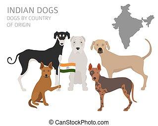 infographic, breeds., pays, chien, indien, gabarit, origin., chiens