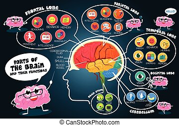 infographic, cerebro, funciones, partes
