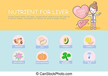 infographic of liver , great for health care concept