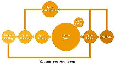 infographic, processus, cadre, scrum, sprints, logiciel, diagramme, développement, entrepreneurs