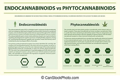 infographic, vs, horizontais, phytocannabinoids, endocannabinoids