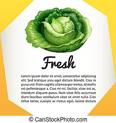 Infographic with fresh cabbage