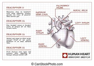 infographics, 医学, 器官