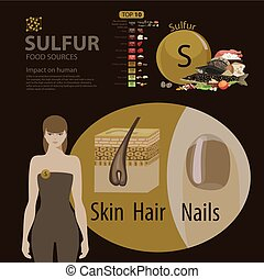 Sulfur. - Infographics. Sulfur. Food sources and influence...