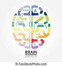 infographics, vetorial, cérebro, desenho, diagrama, linha, estilo, modelo