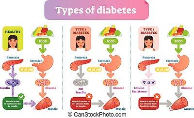 informação, diagram., simples, ilustração médica, vetorial, saúde, tipos, diabetes, scheme., cuidado