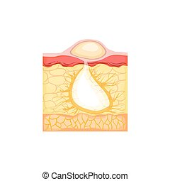 information, développement, illustration, anatomique,...