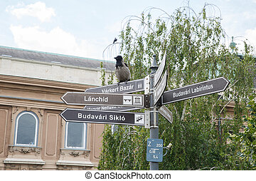 Information sign and a gray crow near the Presidential Palace in Budapest
