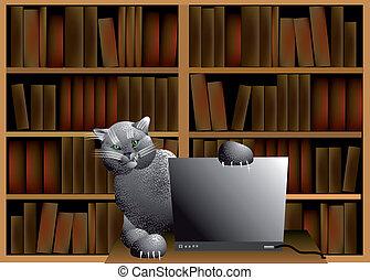 informatique, chat