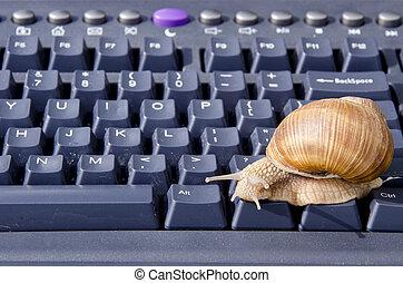 informatique, noir, escargot, clavier