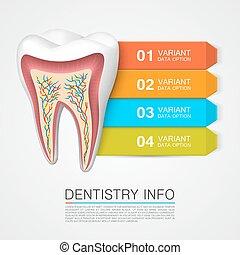 informazioni, odontoiatria, numbering., dente, info.