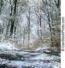 Infrared forest - Panoramic infrared picture of a forest...