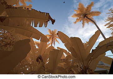 Infrared in false colors of coconut tree and banana trees against a blue sky