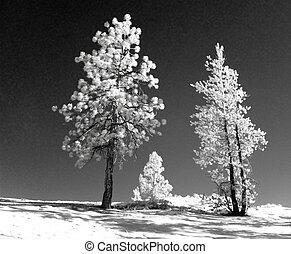 Infrared landscape - Infrared winter landscape taken in...