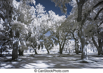 infrared landscape - infrared photo of park and trees