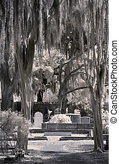 infrared of old cemetery - infrared photo of old cemetery