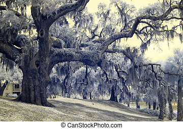 infrared photo of live oaks and palms in south carolina