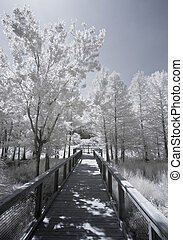 infrared photograph of boardwald and trees - infrared...