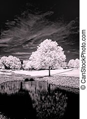 Infrared picture of a tree