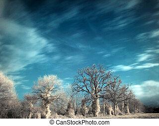 infrarouge, paysage