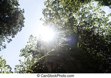 ing, 照ること, 木, 古い, サンアップ