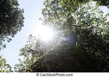 ing, lustrzany, drzewo, stary, słońce do góry
