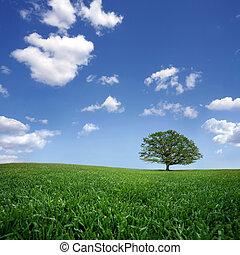 ingediende, boompje, eenzaam, blauwe hemel, wolken, groen wit
