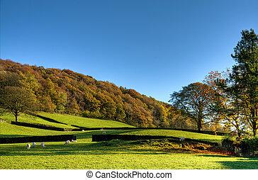 inglés, escena rural, en, otoño