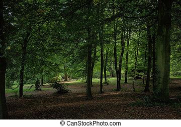 inglaterra, árboles, vista