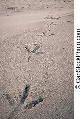ingombri, spiaggia, uccello, sabbia