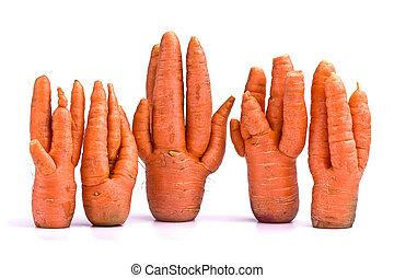 inhabituel, carottes, récolte