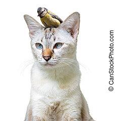 inhabituel, chouchou, amitié, mignon, chat, peu, entre, oiseau