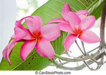 inhome, fleurs, jardin, beauté