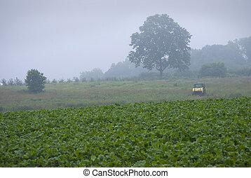 inizio mattina, fattoria
