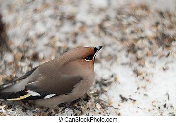 Injured bird on the snow