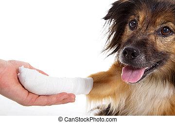 injured dog at veterinarian