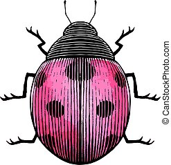 Ink and Watercolor Sketch of a Ladybug