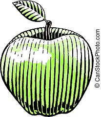 Ink and Watercolor Sketch of an Apple