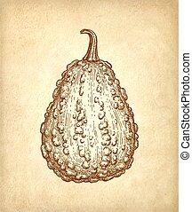 Ink sketch of gourd