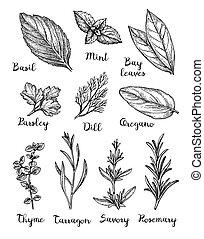 Ink sketch of herbs.