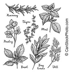 Ink sketch of herbs