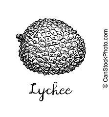 Ink sketch of lychee fruits. - Ink sketch of lychee fruit....