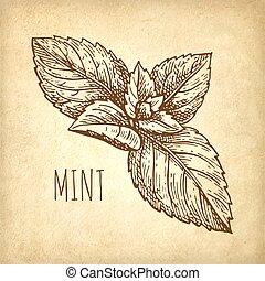 Ink sketch of mint